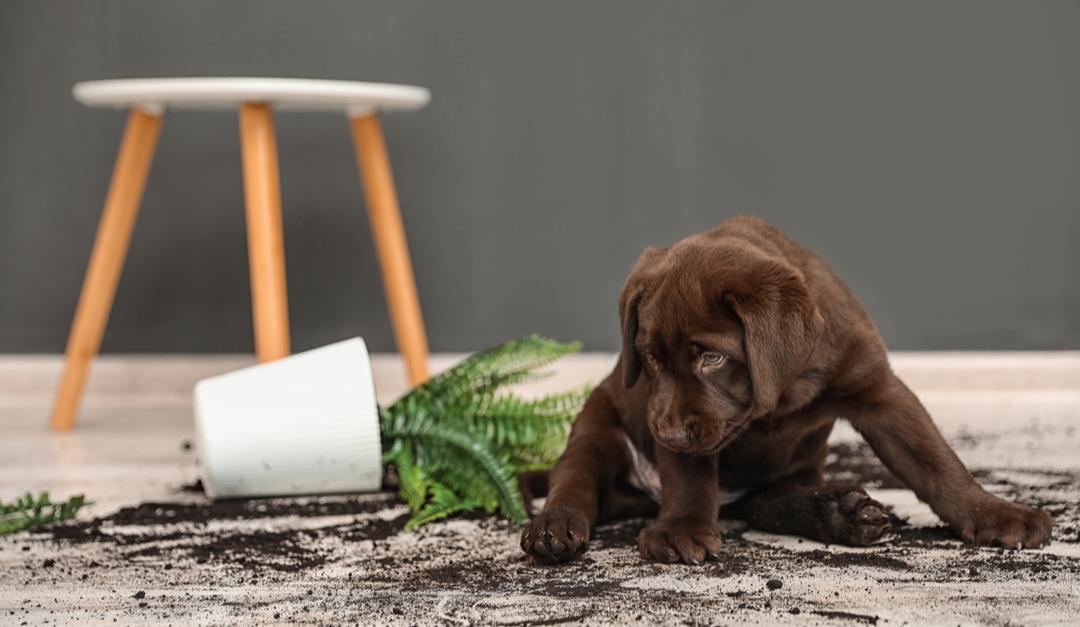 limpiar tu casa si tienes una mascota